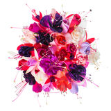 Bouquet of colorful fuchsia flowers is isolated on white backgro Royalty Free Stock Photography