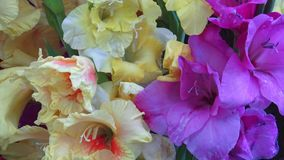 Bouquet with colorful gladiolus. Beautiful gladiolus flowers. stock footage