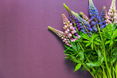Bouquet of colorful lupins on a purple background Stock Images