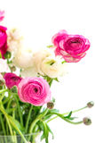 Bouquet of colorful persian buttercup flowers (ranunculus), Isol Stock Photography