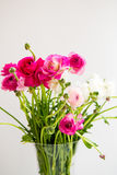 Bouquet of colorful persian buttercup flowers (ranunculus) Stock Photography
