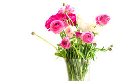 Bouquet of colorful persian buttercup flowers (ranunculus) Stock Image