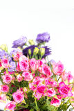 bouquet colorful of pink roses with purper  flower on whte isola Stock Photos