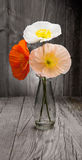 Bouquet of colorful poppies on wooden table Royalty Free Stock Images