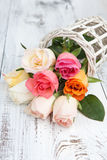 Bouquet of colorful roses Stock Image