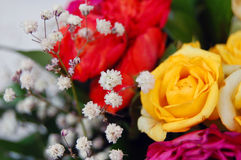 Bouquet of colorful roses Royalty Free Stock Photography