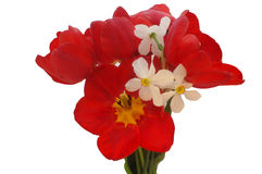 Bouquet of colorful spring flowers of tulips and narcissus Royalty Free Stock Images