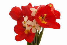 Bouquet of colorful spring flowers of tulips and narcissus on a pure white background Stock Image