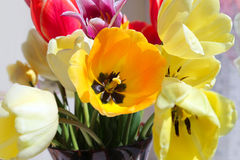 Bouquet of colorful spring tulips Royalty Free Stock Images