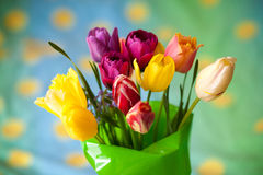 Bouquet of colorful tulip Stock Image