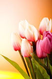 Bouquet of colorful tulips Stock Images
