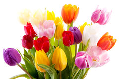Bouquet of colorful tulips Royalty Free Stock Photography