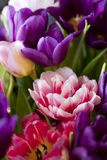 Bouquet of colorful tulips. For background Royalty Free Stock Images