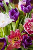 Bouquet of colorful tulips. For background Royalty Free Stock Photo