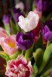 Bouquet of colorful tulips. For background Stock Photos