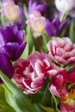 Bouquet of colorful tulips. For background Stock Photo
