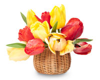 Bouquet of colorful tulips  in a basket Stock Photography