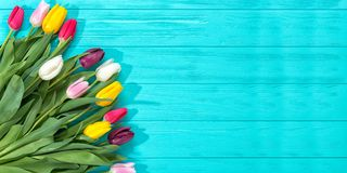 Spring background!A bouquet colorful tulips on blue wooden background.Holiday greeting card for Valentine`s Day, Woman`s Day, Moth. A bouquet colorful tulips on stock photography