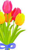 Bouquet of Colorful Tulips Bound with Blue Ribbon Royalty Free Stock Image