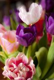 Bouquet of colorful tulips. For background Royalty Free Stock Photos