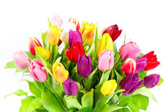 Bouquet of colorful tulips flowers Stock Photo