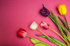 Bouquet of colorful tulips on a pink background. Space for text stock photos