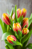 Bouquet of colorful tulips Royalty Free Stock Images