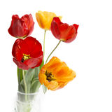 Bouquet of colorful tulips. Royalty Free Stock Photography