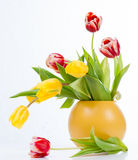 Bouquet of colorful tulips in vase.  Royalty Free Stock Photo