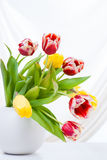 Bouquet of colorful tulips in vase.  Stock Photo