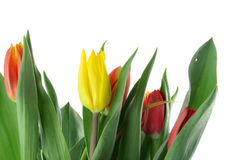 Bouquet of colorful tulips on white Stock Photo