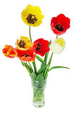 Bouquet of colorful tulips on the white background Royalty Free Stock Images