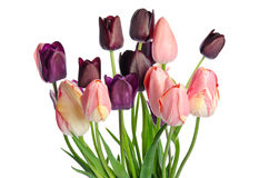 Bouquet of colorful tulips Royalty Free Stock Photos