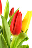 Bouquet of colorful tulips. Stock Images
