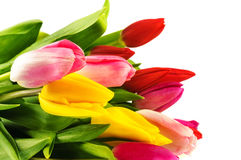 Bouquet of colorful tulips. Royalty Free Stock Images