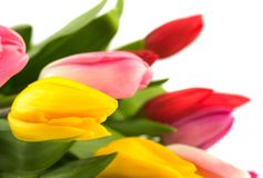 Bouquet of colorful tulips. Royalty Free Stock Photo