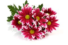 Bouquet of colors Royalty Free Stock Photo