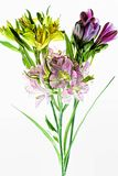 Bouquet of coloured alstroemeria flowers isolated on white background Stock Image