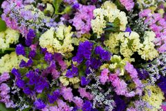 A Bouquet of colourful flowers. Royalty Free Stock Photography