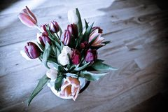 A bouquet of colourful tulips royalty free stock photo