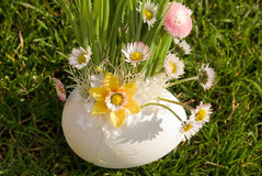 Bouquet of colours in egg. Close up of blooming chamomile flowers in ornamental pot on grass Royalty Free Stock Photos