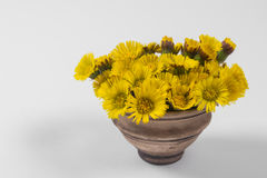 Bouquet  Colts Foot or Tussilago Stock Photography