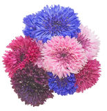 Bouquet of cornflower Royalty Free Stock Photography