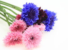Bouquet of cornflower Royalty Free Stock Image