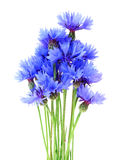 Bouquet of cornflowers Stock Photography