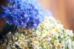 Bouquet of cornflowers and chamomiles Royalty Free Stock Image