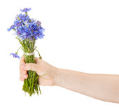 Bouquet of cornflowers in a female hand Royalty Free Stock Photography