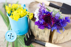 Bouquet of cornflowers Stock Photo