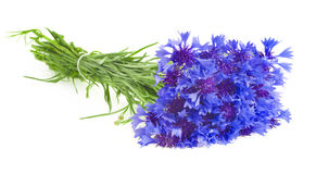 Bouquet of cornflowers Royalty Free Stock Image
