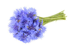 Bouquet of Cornflowers Isolated on White Background Royalty Free Stock Photo